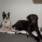 Hundewanderung 14.12.2013