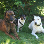 Hundewanderung 20.7.2013