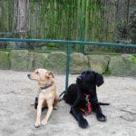 Hundewanderung 22.3.2014