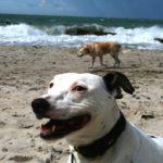 Hundewanderung 20.6.2015